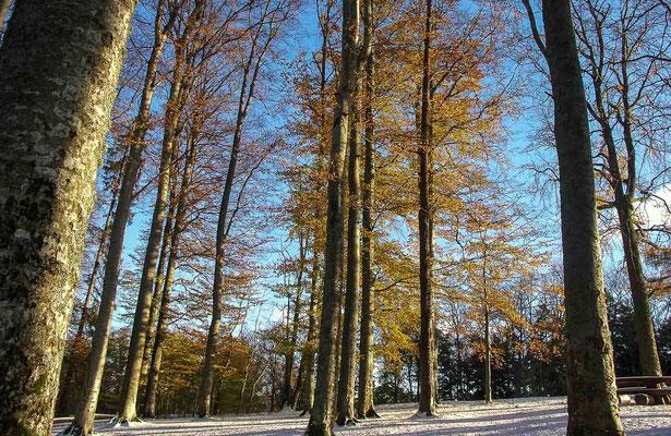 Photos de forêts des Vosges - Col de Sainte-Marie-aux Mines, Alsace - Dominique MAYER - Photographie - www.dominique-mayer.com