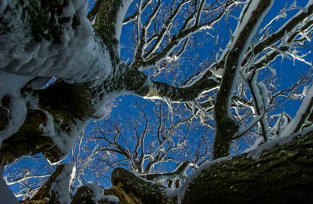 Photos de forêts des Vosges - Mont Sainte-Odile, Alsace - Dominique MAYER - Photographie - www.dominique-mayer.com