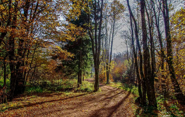 Photos de forêts des Vosges - Chaume de Lusse, Vosges - Dominique MAYER - Photographie - www.dominique-mayer.com