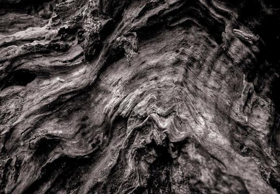 Ecorces d'arbres - Photos de nature - Dominique MAYER - www.dominique-mayer.com