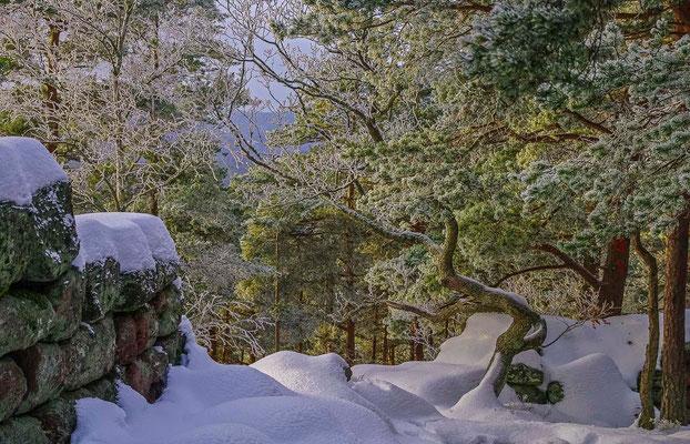 Photos de forêts des Vosges - Mont Sainte-Odile, mur Païen, Alsace - Dominique MAYER - Photographie - www.dominique-mayer.com