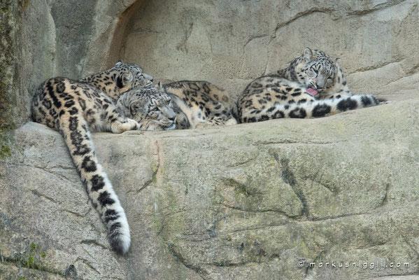 Okara, Villy und Orya