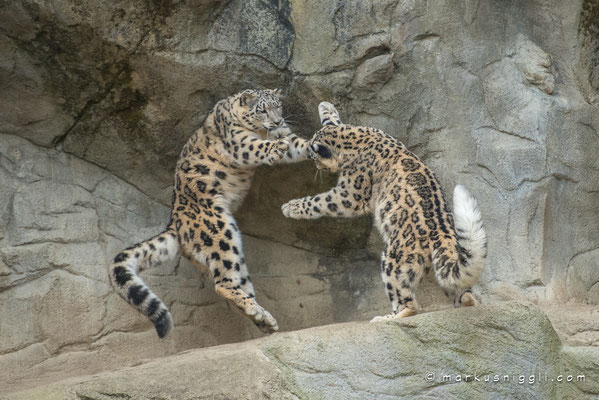 Orya und Okara