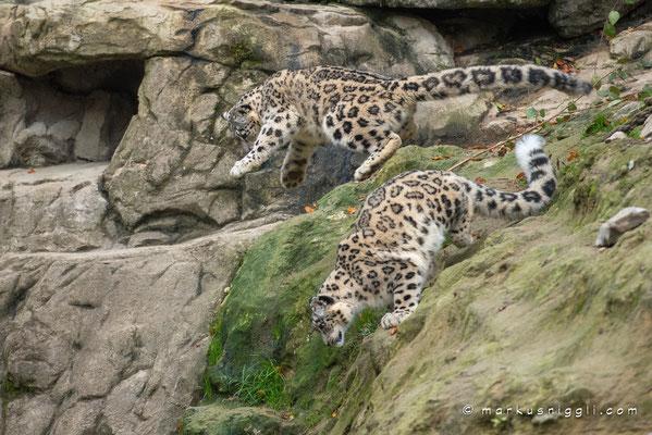 Orya und Okara (in der Luft)
