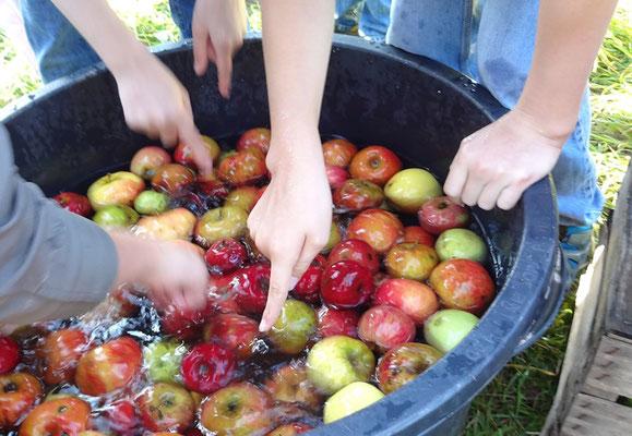 Foto: Äpfel waschen, Pia Rode
