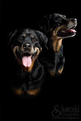 """16.04.2016 - Rottweiler """"Zinja"""""""