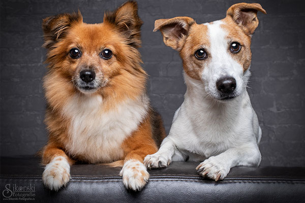 """29.10.2018 - Chihuahua Mischling """"Lilly"""" & Jack Russel Terrier """"Cosmo"""""""