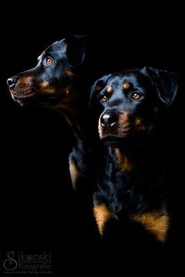 "13.05.2015 - Rottweiler ""Jella"""
