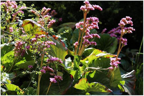 Blumengruß am Haus