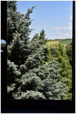 Ferienwohnung Blick aus dem Küchenfenster