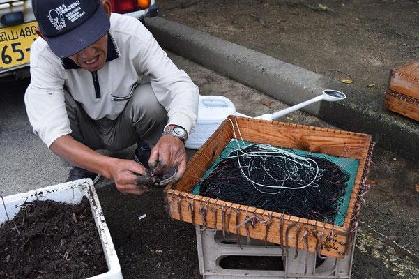 【西大寺の町並みシリーズ(その39)】2015年7月のとある日の夕べ、ちいさな漁船が戻って来た上のところで、おじさんが作業中。ミミズですね。「何の漁に使うんですか?漁師さんですか」の問いに「うなぎ」のお答え。もしや、観音院に通じる魚屋さんののぼりはこのここで獲れるうなぎですか!