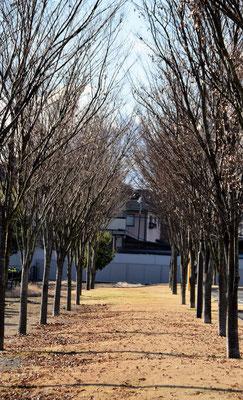 図書館の近くにこんな木立もあります。これは2016年12月27日の午後3時過ぎに撮影しました。