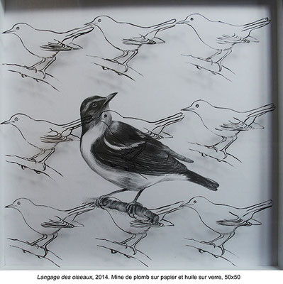 Langage des oiseaux - 2014 - Mine de plomb sur papier et huile sur verre - 50x50