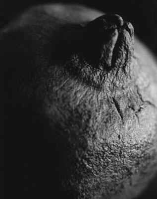 Willemine Jaspars - Grenade - tirage argentique sur papier baryté