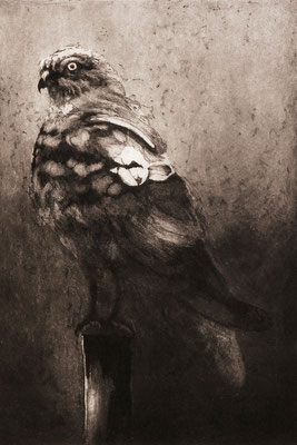 """Isabelle Panaud - gravure -"""" busard centré """""""