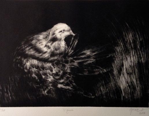 Maria Ahmadi - gravure - pigeons  - 40x50cm -2016