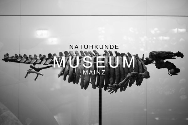 Naturkundemuseum Mainz Fotografie