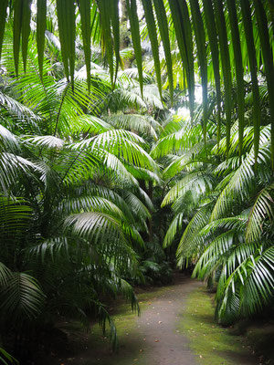 Botanical Garden Furnas - Sao Miguel