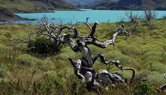 Verbrannter Wald Nationalpark Torres del Paine