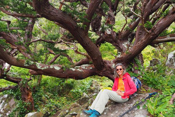 Wald während Küstenwanderung  - Flores