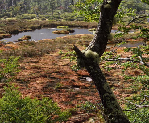 Feuerland - Moorsumpf