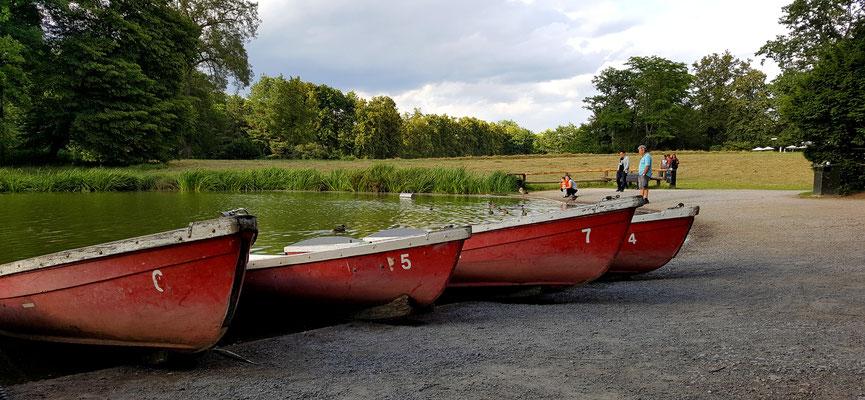 Das lieben fast alle Aschaffenburger im Sommer - Ruderboot fahren auf dem Schönbusch-See
