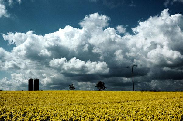 KW 20: Gelbe Blütenpracht in Schleswig-Holstein