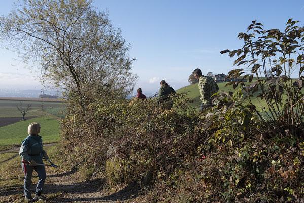 Die Hecke beim Eingang zum Sädelbachwald