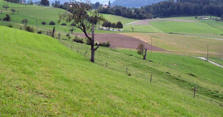 Dem Zaun entlang wird eine vielfältige Baumreihe entstehen