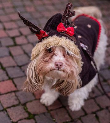 Weihnachtsmarkt Hund