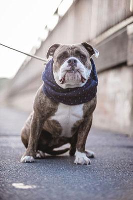 Hundefotografie Kameratypin