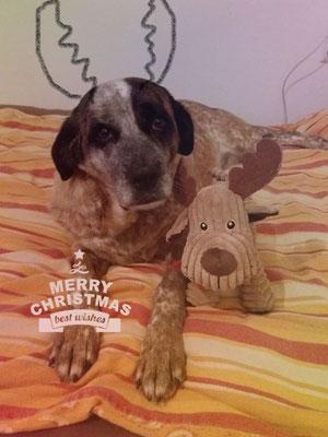 Ganja sendet liebe Weihnachtsgrüße