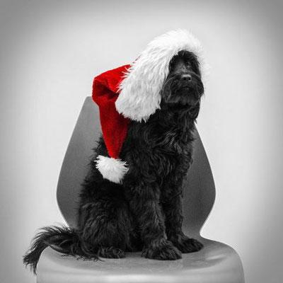Paddy - nun Pepe schickt liebe Weihnachtsgrüße. Das Weihnachtsgeld an CanisPRO hat er auch schon überwiesen.