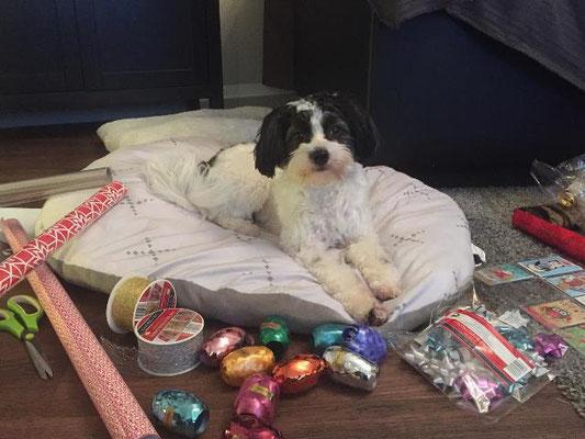 Keko hilft beim Einpacken und wünscht frohe Weihnachten