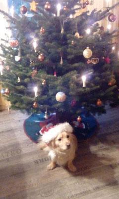 Pépe und Familie wünschen allen ein schönes Weihnachtsfest!