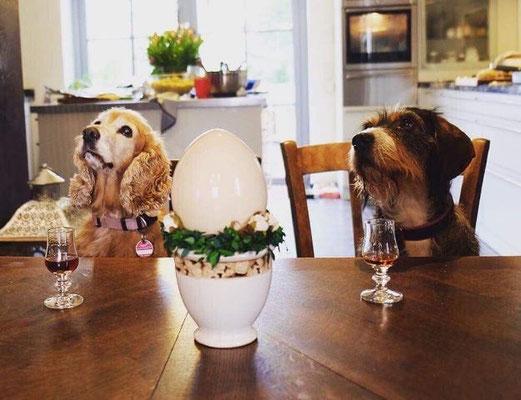 Frohe Ostern wünschen Euch Frieda und Luna