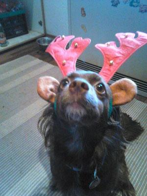Maggie sendet liebe Weihnachtsgrüße