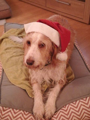 Dalton - nun Sam wünscht schöne Weihnachten