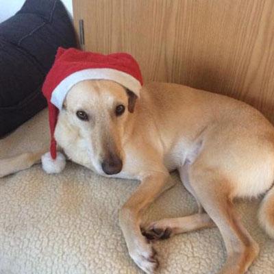 Liebe Grüße zu Weihnachten von Elliot und Familie