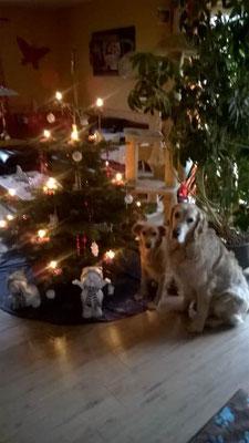 Fröhliche Weihnachten von Holly und Freund Charly