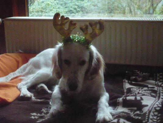 Peter - nun Pepper und Familie wünschen frohe Weihnachten
