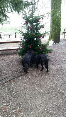 Atreyu wünscht eine schönen Weihnachtshzeit