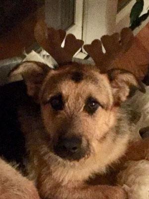 Ronja grüßt herzlich zu Weihnachten