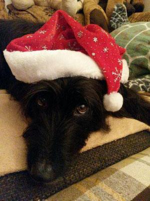 Monty sendet liebe Weihnachtsgrüße