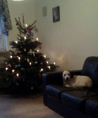 Lander wünscht frohe Weihnachten