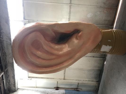 """Oreja"" gigante"
