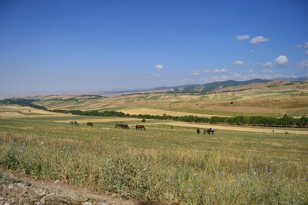 Allgegenwärtiges Bild: frei umher laufende Pferde