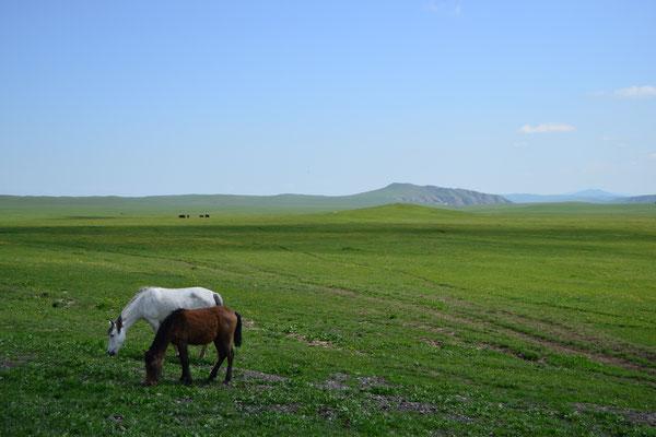 Mongolei-Feeling bei Dawit Garedscha