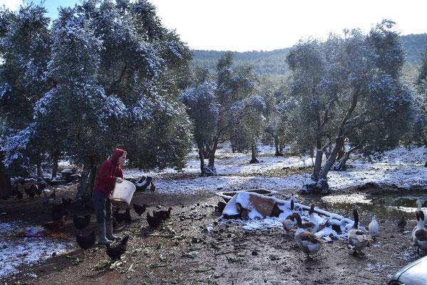 Bei Selcuk: Füttern der Hühner im Schnee
