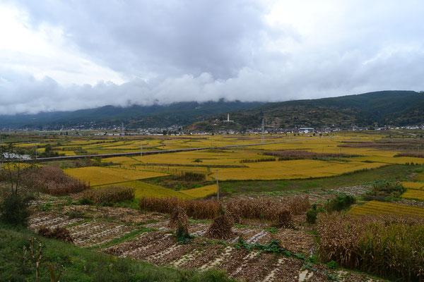 Farbenprächtige Reisfelder auf dem Weg nach Dali
